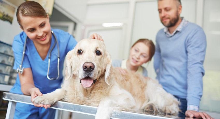 tvet veterinary autoclave